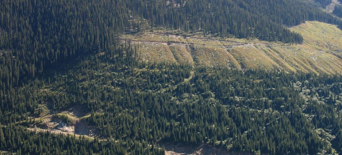 Quarry with recent cut blocks upslope – new exploration target!